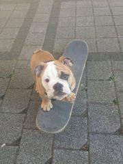 Schulhund Gunnar